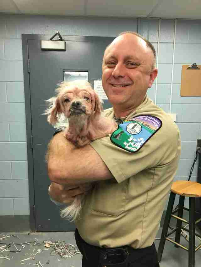Animal control officer holding rescued Shih tzu
