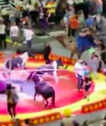 Circus camel in Pittsburgh panics while giving child ride