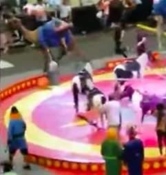 Circus camel panics at performance in Pittsburgh