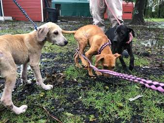 Dogs rescued during hurricane
