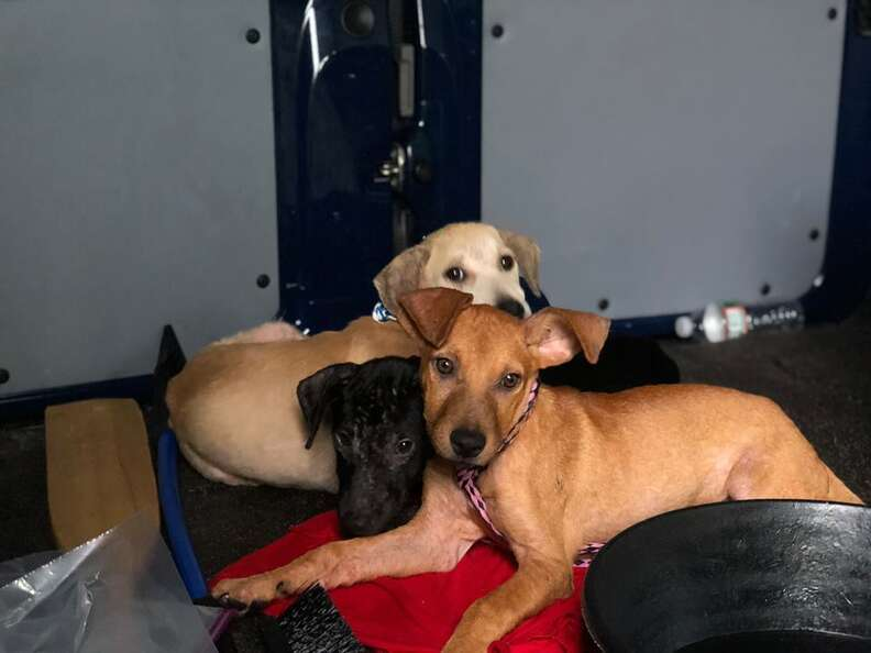 Puppies cuddled up in trailer