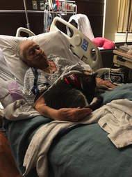 blind cat comforts grandma in hospital