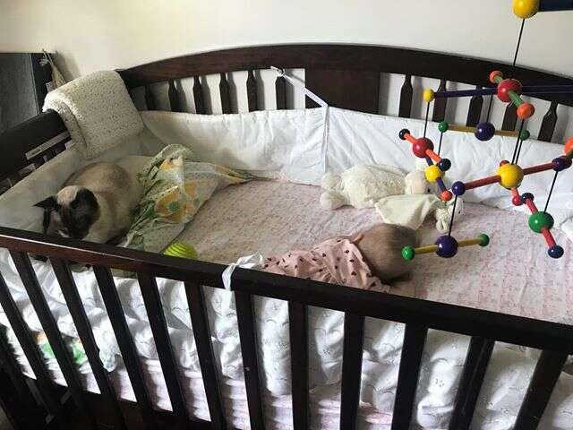 Former stray cat cuddles with newborn baby