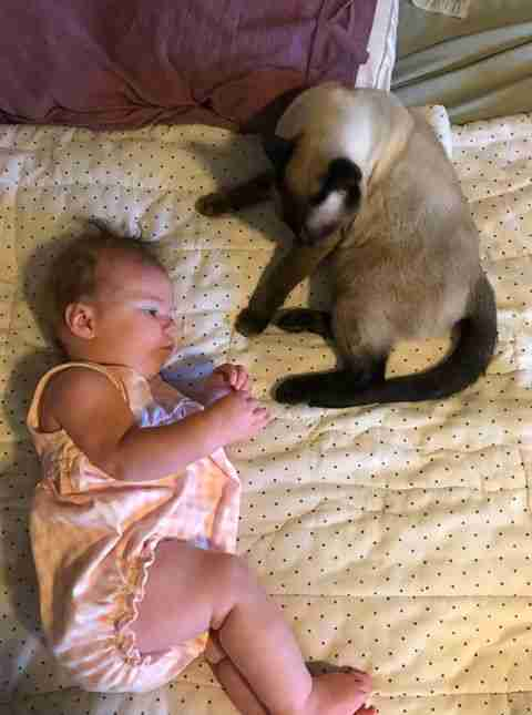 Former stray cat cuddles with newborn baby