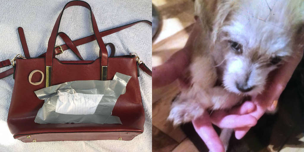 b003bde22 Puppy Found Tied Up And Abandoned In Purse Outside Store In London - The  Dodo