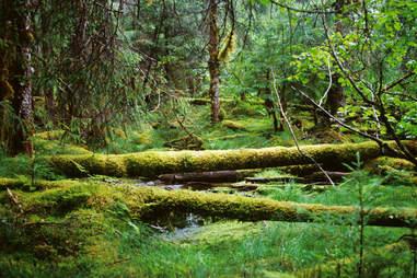 The Herbert Glacier Trail Rainforest