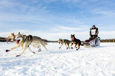 Musher Allen Moore competing in the Iditarod