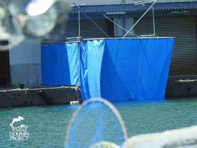 Tarps around a butcher house in Taiji