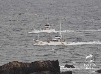 Banger boats searching for a new pod of dolphins