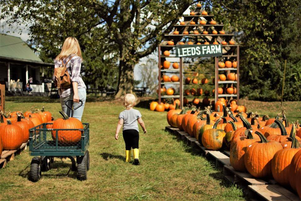Best Pumpkin Patches In Ohio Places To Go Pumpkin Picking More Thrillist