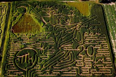 Maize Valley