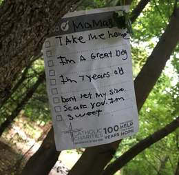 A note left on the tree where Mamas the dog was tied