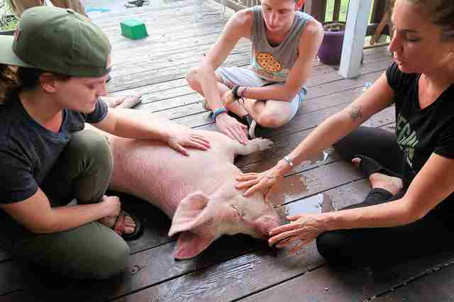 People petting pig on a porch
