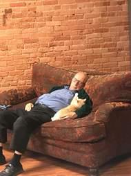 volunteer falls asleep with cats