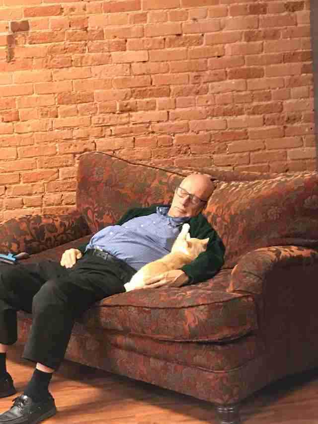 volunteer falls asleep with cats