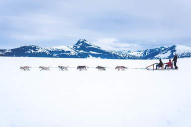 Dogsledding outside Juneau