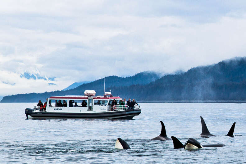 """Hikers on the """"Alaska's Whales, Glaciers & Rainforest"""" Trip with Gastineau Guiding"""