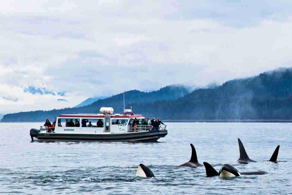 "Hikers on the ""Alaska's Whales, Glaciers & Rainforest"" Trip with Gastineau Guiding"