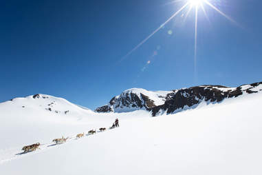 Alaskan dogsledding