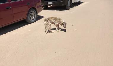 Skinny stray dog running on a dirt road