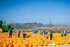 The Best Places to Go Pumpkin Picking Around LA