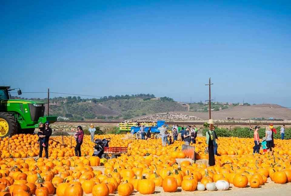 Best Pumpkin Patches In Los Angeles Places For Picking La Thrillist