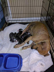 Mother dog with her newborn puppies