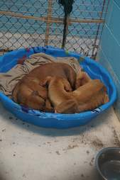 Bonded dogs curled up in the same bed