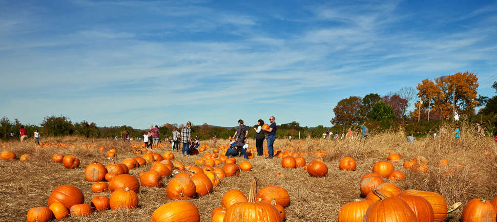 The Best Pumpkin Patches to Pick Your Future Jack-O'-Lantern Near NYC This Fall