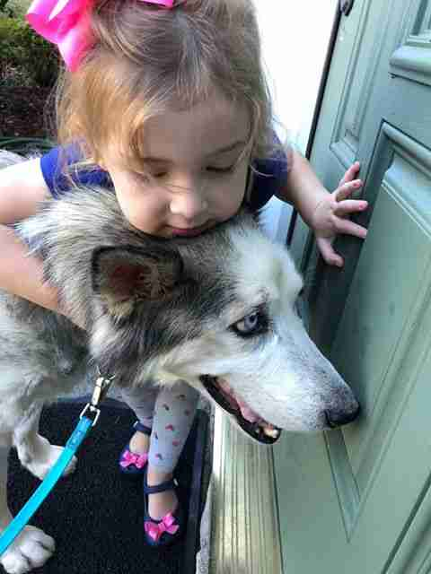 Little girl hugging husky