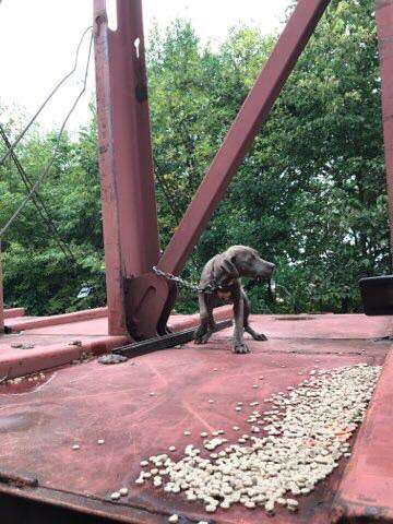 Puppy chained to train car in Wisconsin