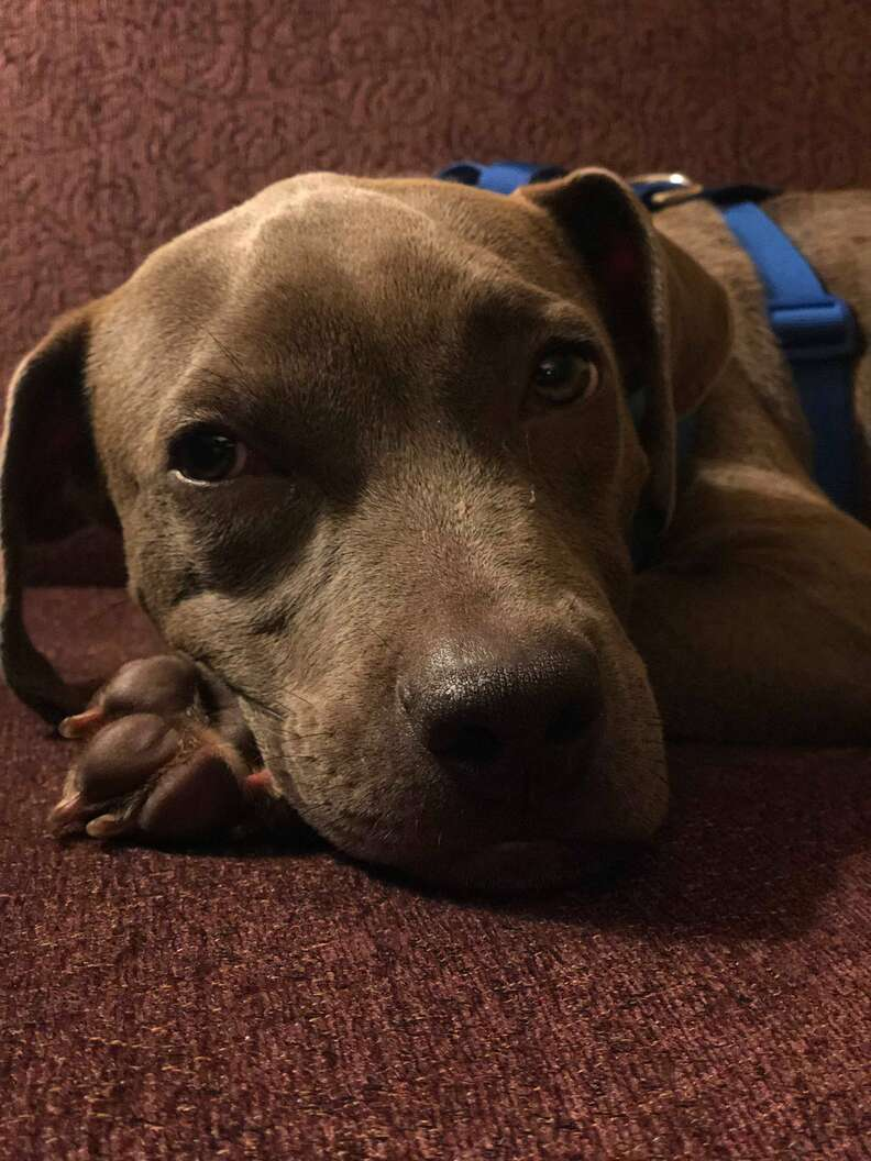 Lulu the dog rescued from a Wisconsin train