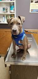 Lulu visits the vet with her new family