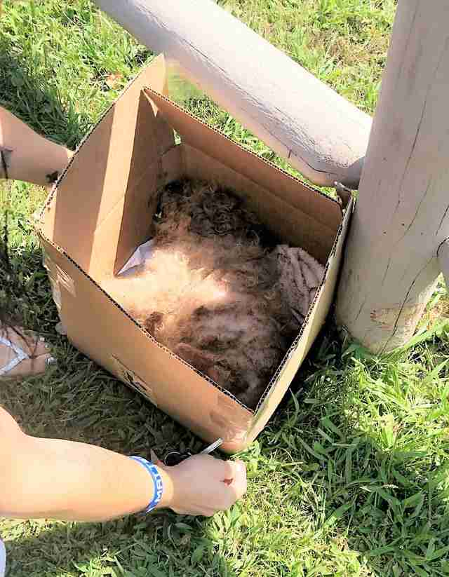 Volunteer finds poodle in box outside New Jersey shelter