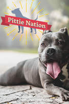 Pittie Nation cover art
