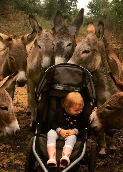 Little girl bonding with herd of rescued donkeys at sanctuary