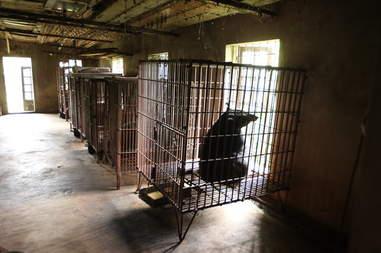 Old bear bile farm in Vietnam