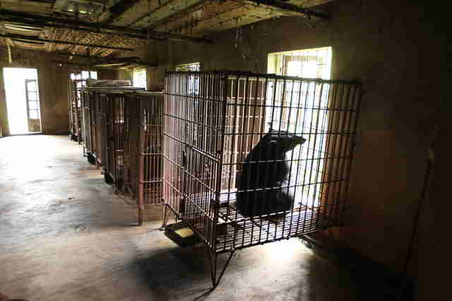 Old bear bile farm in Vietnam
