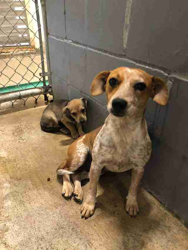 Mother dog Sadie and her baby Benzy in rural South Texas shelter