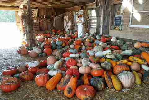 pile of gourds and pumpkins