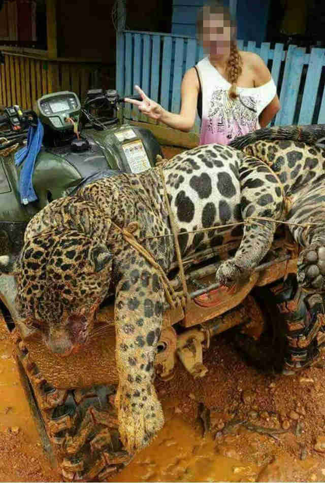 Woman posing with dead jaguar