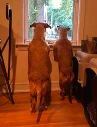 Rogue and Beast wait for their parents to return home