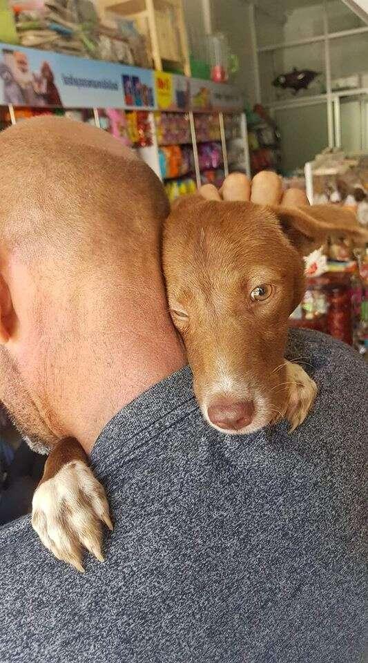 Dog wrapping around man's neck