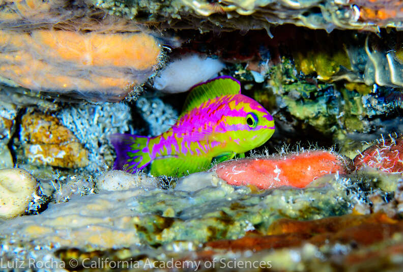 New species of neon fish just discovered