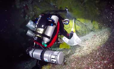 """Divers in """"twilight zone"""" reef off Brazil"""