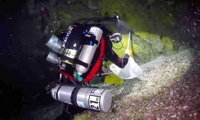 "Divers in ""twilight zone"" reef off Brazil"