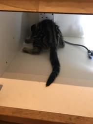 kitten stuck in a cabinet