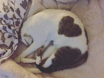 Cat with heart marking in fur