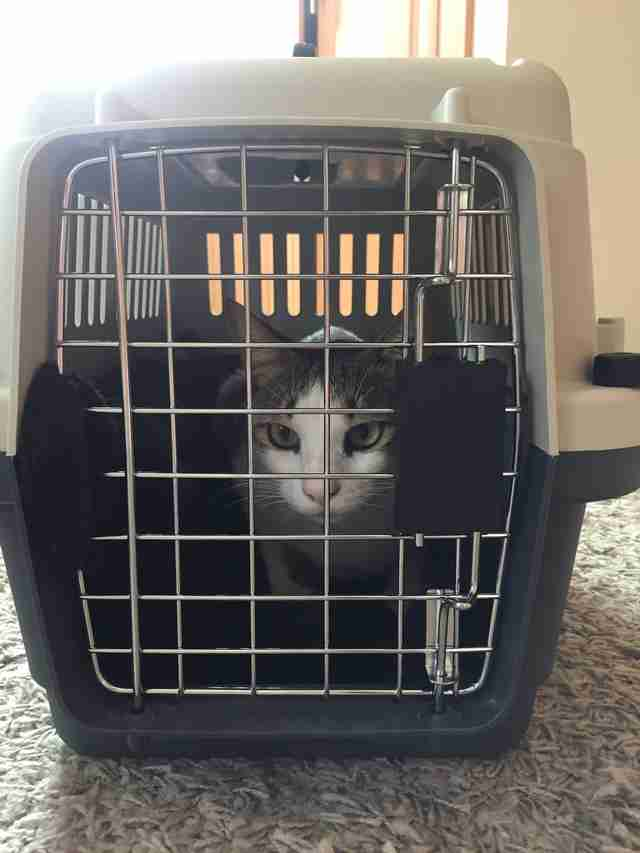 Braveheart the cat gets ready to travel from Dubai to South Africa