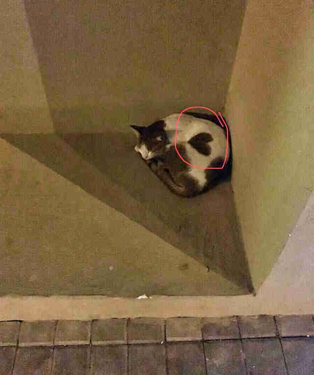 Jane discovers friendly stray cat has a heart marking on his side